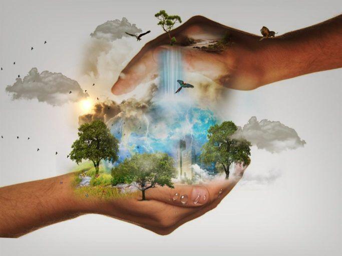 Ilustracja do informacji: Kiedy należy zgłosić wycinkę drzew