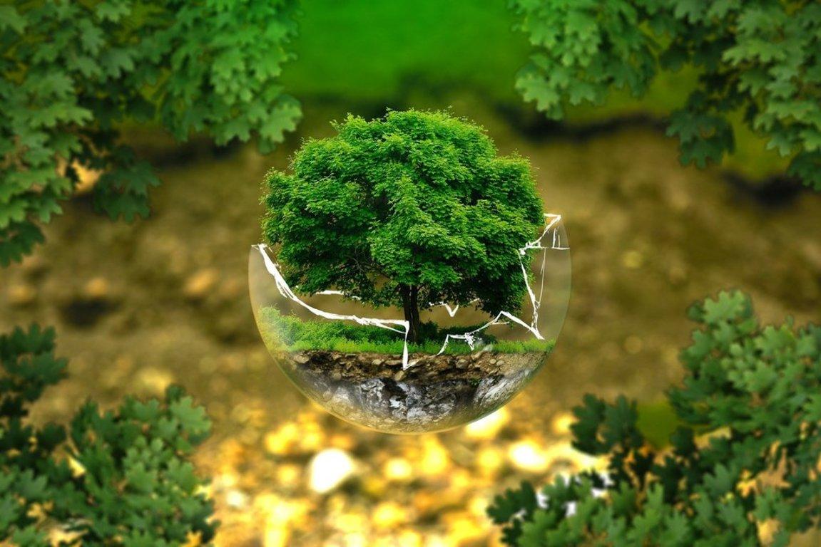 Ilustracja do informacji: VIII edycja konkursu o Nagrodę im. Prof. Janiny Wengris za wspieranie postaw proekologicznych oraz propagowanie działań i rozwiązań przyczyniających się do zmniejszenia zagrożenia środowiska naturalnego oraz do jego ochrony